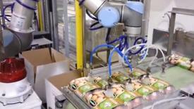优傲机器人包装鸡蛋